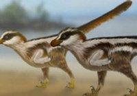 Найдены самые маленькие следы динозавров в мире