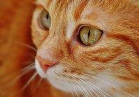 Кота, выжившего при пожаре в Калифорнии, вернули семье (ВИДЕО)
