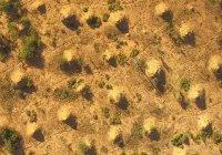 В Бразилии нашли города термитов, которые видно из космоса (ФОТО)