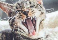 Раскрыта главная тайна шершавого кошачьего языка