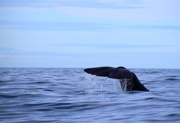 10-метровая туша найдена на берегу острова Капота специалистами национального парка Вакатоби