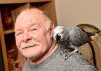 В Англии попугай вызвал пожарных, имитируя сигнализацию (ВИДЕО)