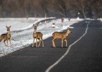 «Яндекс» предупредит водителей о диких животных на дорогах