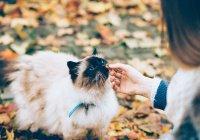 За попытки сделать из кошек вегетарианцев в Британии грозит тюрьма