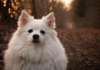 Жители России выбрали самую любимую породу собак
