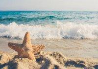 В Великобритании побережье покрылось звездами