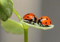 Отель для насекомых открылся в Москве