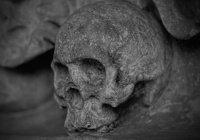 Нейросеть определит интеллект человека по черепу