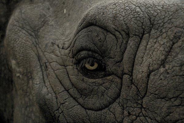 Местные дороги оборудованы четко различимыми знаками, предупреждающими о выходе слонов на проезжую часть