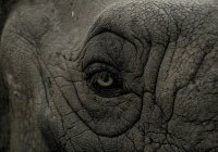 В Таиланде слон растоптал машину вместе с водителем