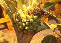 На Урале в колонии вырастили лимоны и бананы (ФОТО)