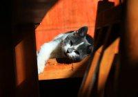 Депутат призвал не делать из котов преступников