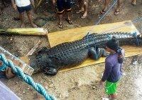 На Филиппинах поймали 5-метрового крокодила-людоеда