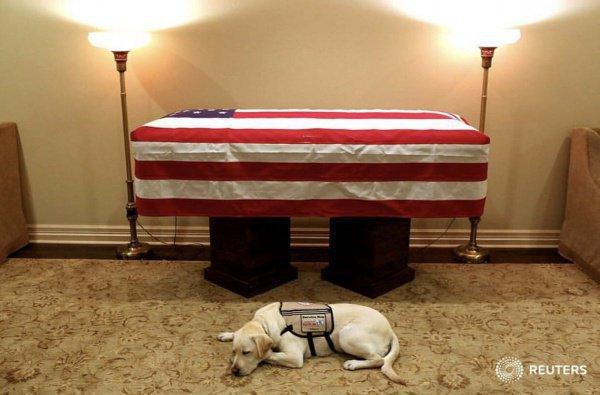 Тоскующая собака у гроба Буша-старшего.