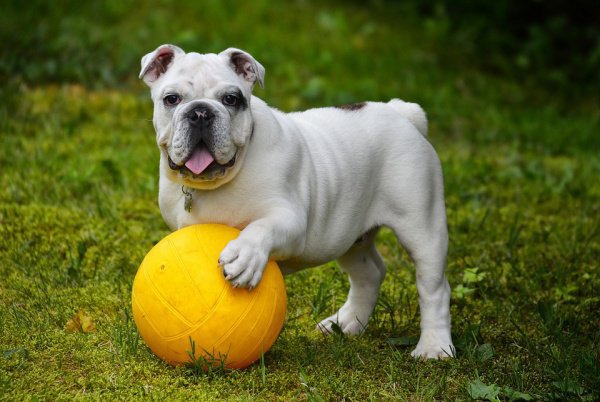Героизм пса все равно не остался без внимания аплодировавших футбольных болельщиков