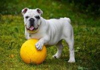 В Аргентине собака спасла команду от гола (ВИДЕО)
