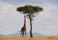 Тур по мотивам мультфильма появился в Кении (ФОТО)