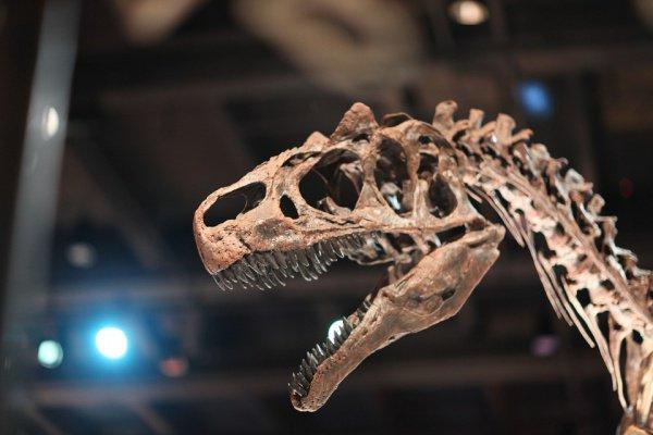 В общей сложности было найдено 7 позвонков титанозавров, которые пролежали в земле порядка 130 млн. лет