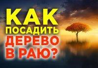 Прочитавший этот тасбих посадит для себя дерево в Раю уже при жизни