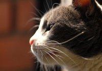 Жители Турции вступились за ограбленную бездомную кошку (ВИДЕО)