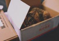 В Канаде хозяйка отправила кота по почте