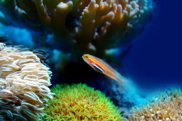 Ключевым рабочим инструментом является LarvalBot — автоматический подводный аппарат, который предназначен для выпускания личинок кораллов в подходящих для них местах