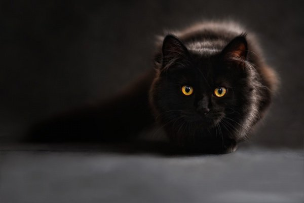 Дома для котиков формируют целые пространства со сбалансированным питанием, теплыми лотками и другими благами,
