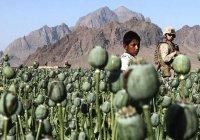 В Афганистане ежегодно лечатся более 40 тысяч наркозависимых