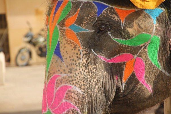 Животное сыграло хоботом на губной гармошке, пританцовывая при этом в такт музыке