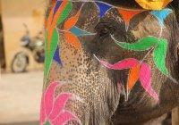 В Индии запечатлели слониху, играющую на губной гармошке (ВИДЕО)