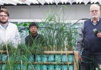 Создано растение, очищающее воздух от канцерогенов