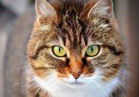 Выявлены самые популярные в России кошки