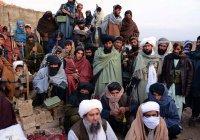 Стало известно, сколько «зарабатывает» «Талибан»