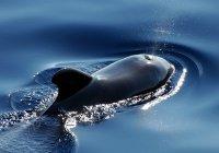 В США ученые нашли у дельфинов диалекты