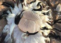 В Австралии нашли морское чудовище
