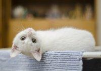 В Китае впервые в истории клонируют котенка