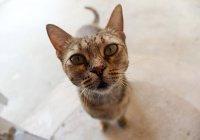 В Сиднее кошка вернулась домой через 14 лет