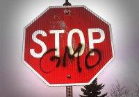 В России отметят все продукты с ГМО