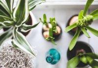 Названо комнатное комнатное растение, предотвращающее рак