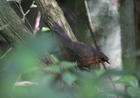 Самая редкая в мире птица замечена в Бразилии