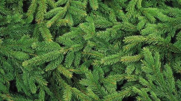Предложено необычное применение для новогодних елок