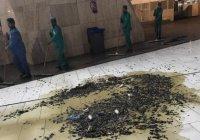 Нашествие насекомых переполошило Мекку (Видео)