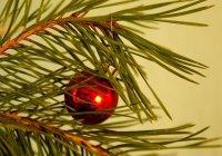 Услуги по разбору елки предлагаются в Интернете