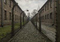 Ученые: пережившие Холокост живут дольше других