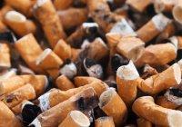 В мозге обнаружили причину алкоголизма и курения