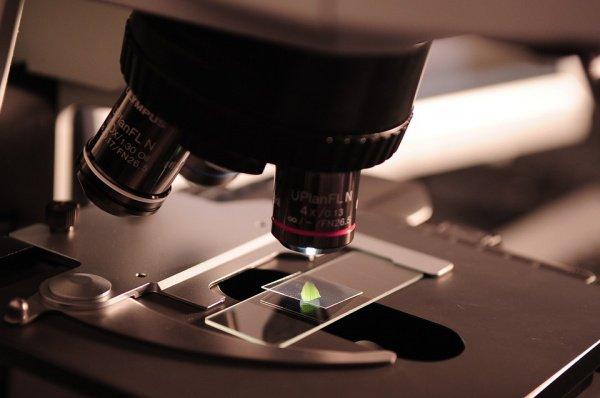 По словам ученых, 3 гена из семейства Ras мутируют в более чем 25% случаев рака