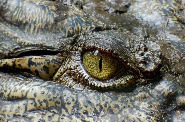 Крокодил, по словам местных жителей, отличался дружелюбием