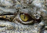 На похороны крокодила в Индии пришли 500 человек
