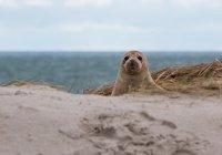Тюлени захватили небольшой город в Канаде (ВИДЕО)