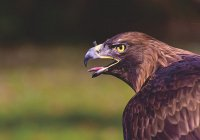 Ученые: глобальное потепление превратило птиц в жестоких убийц